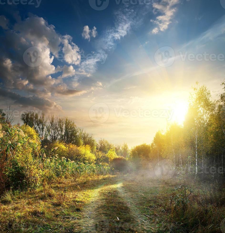 nevoeiro em madeira de outono foto