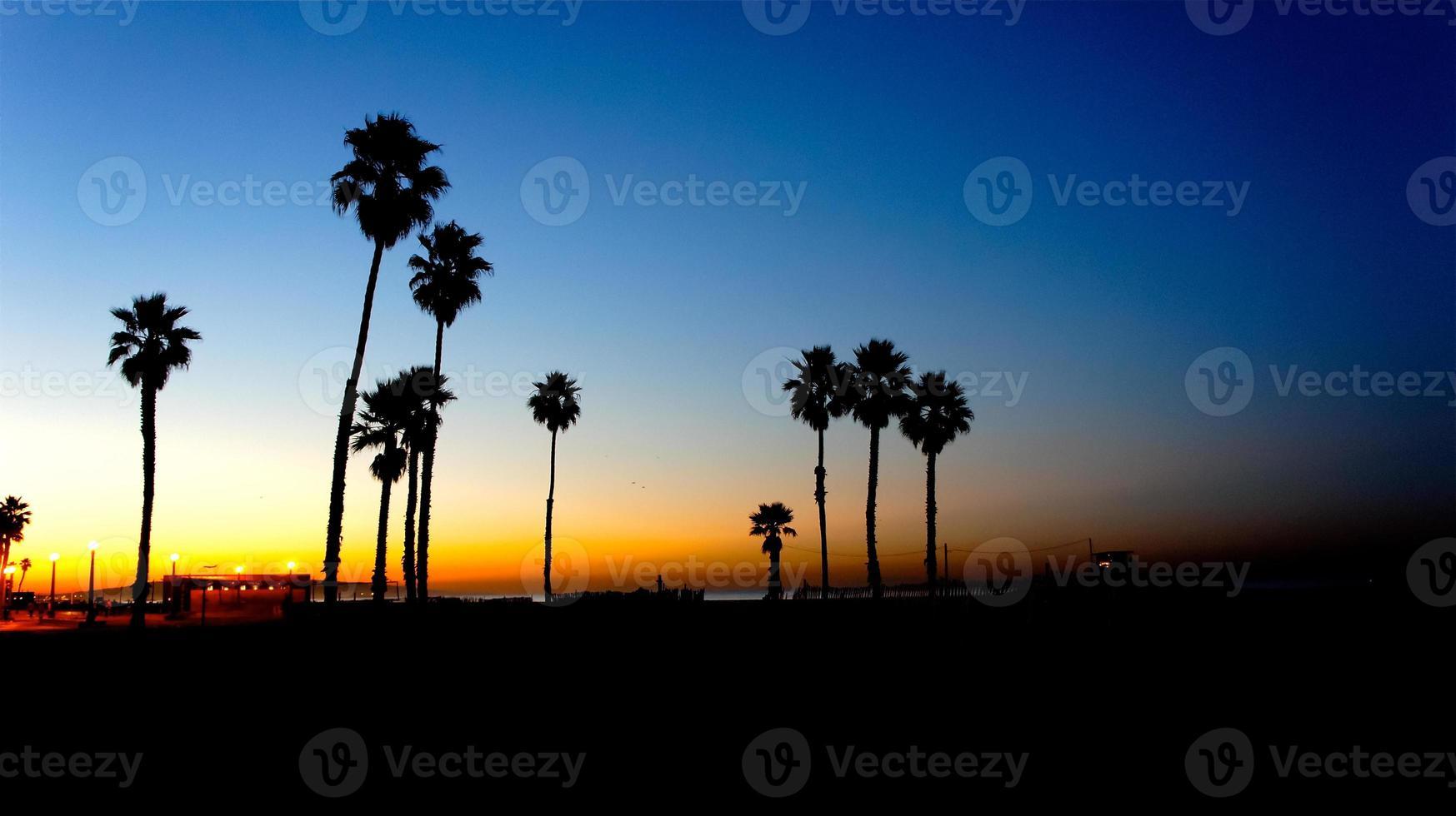 palmeiras praia do sol foto