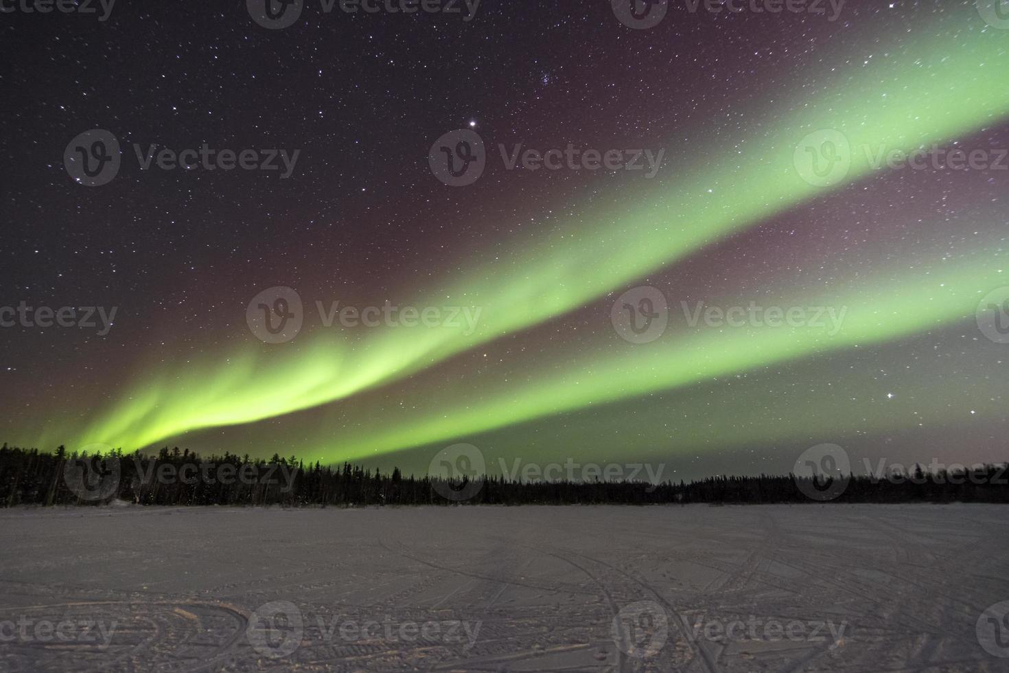 aurora sobre árvores em yellowknife, canadá foto