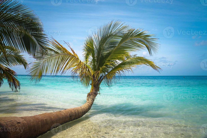 praia tropical intocada nas maldivas foto