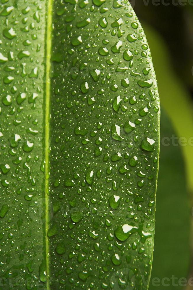 folha na chuva foto