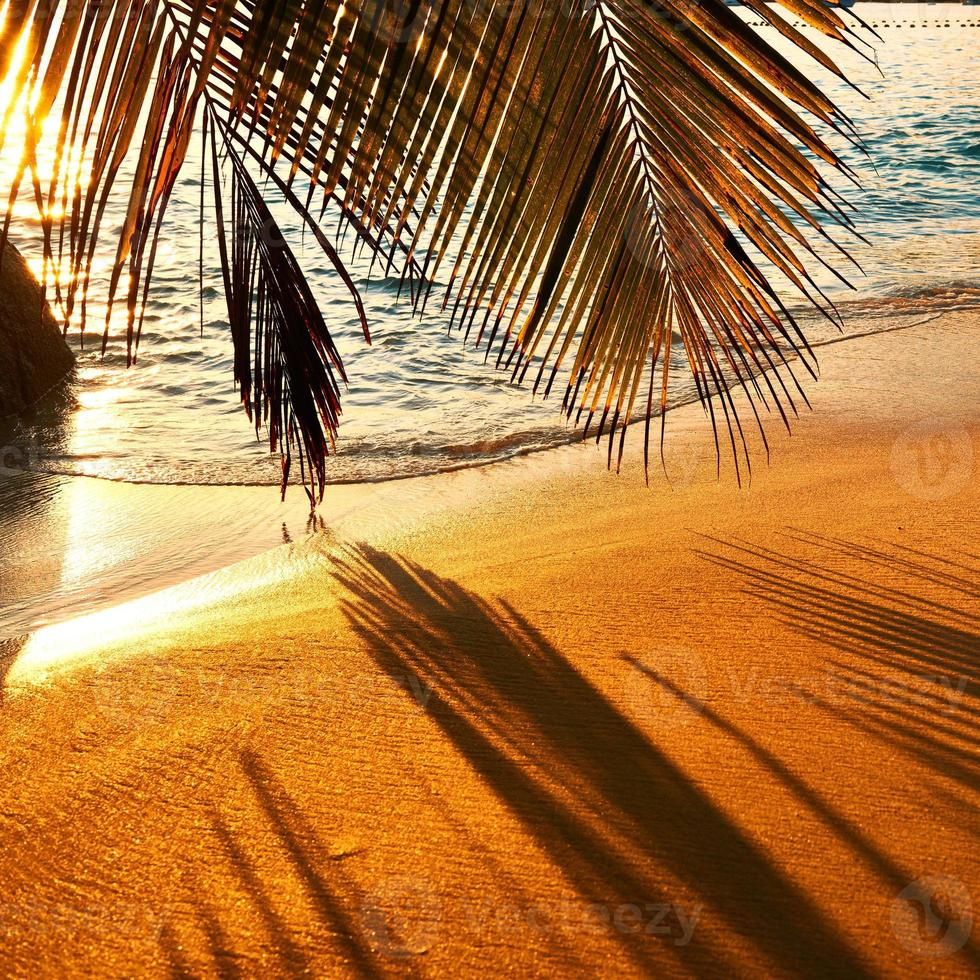 belo pôr do sol na praia de seychelles com sombra de árvore de palma foto