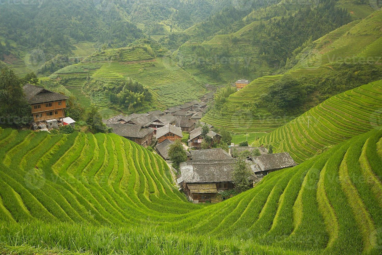 campos de arroz longji foto