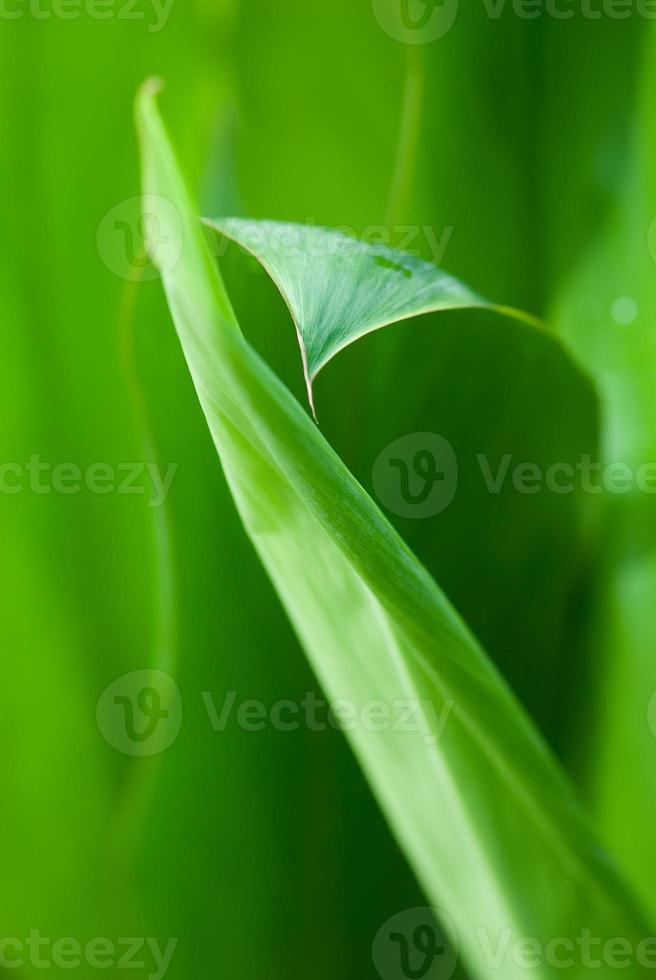 orvalho da manhã em flores tropicais foto