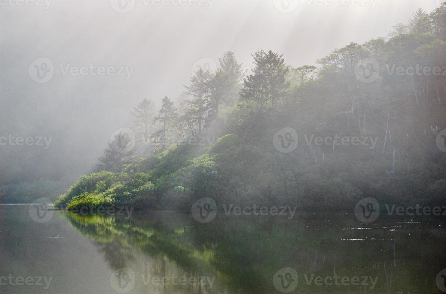 parque nacional da sequóia vermelha foto