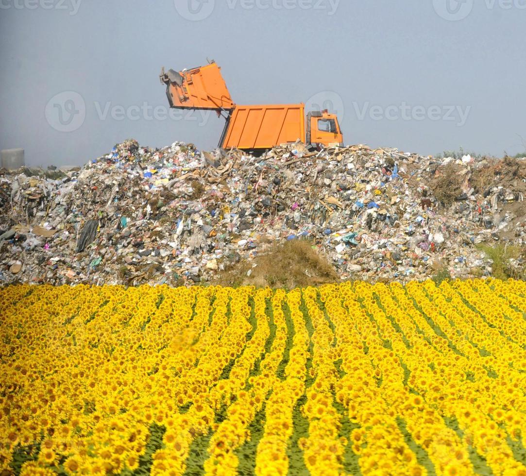 campo de girassóis com depósito de lixo em segundo plano foto