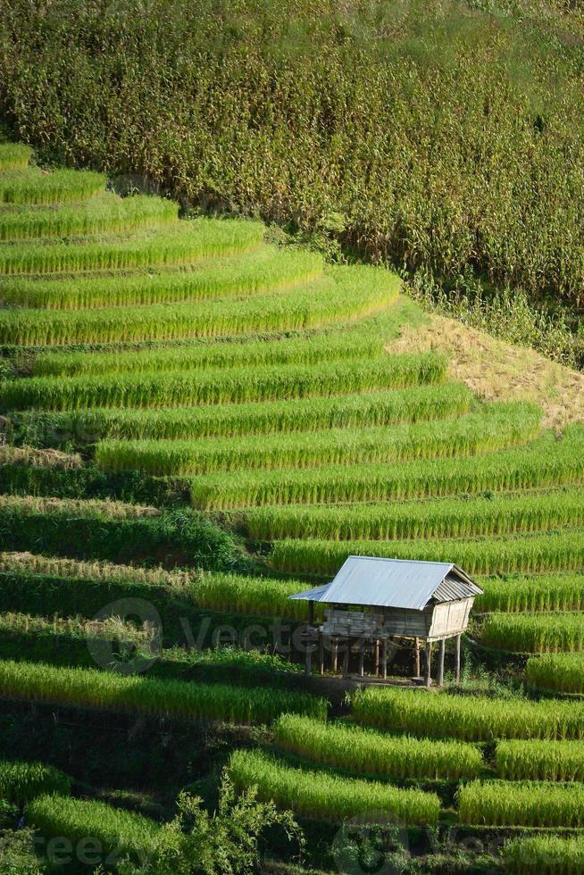 cabana no terraço de arroz foto