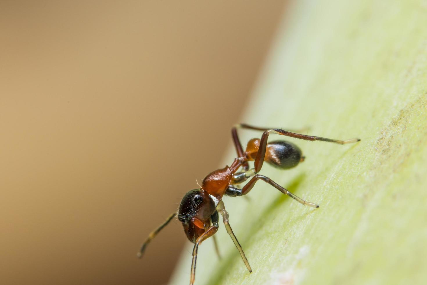 aranha macro na planta foto