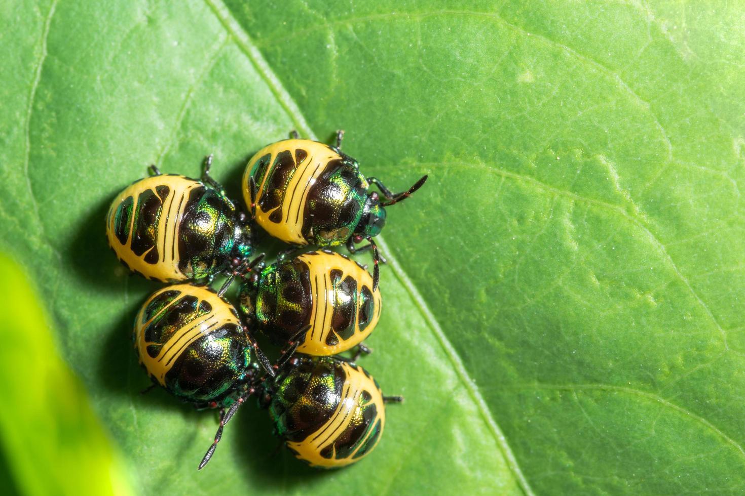 grupo de besouro na folha foto
