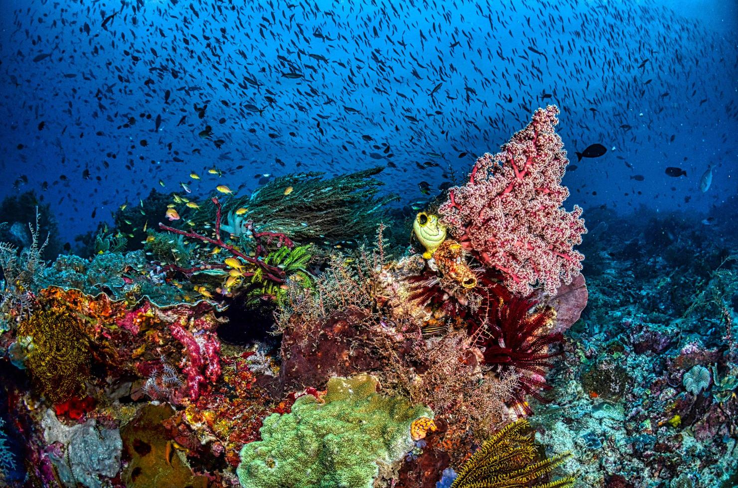 close-up de recifes de corais foto