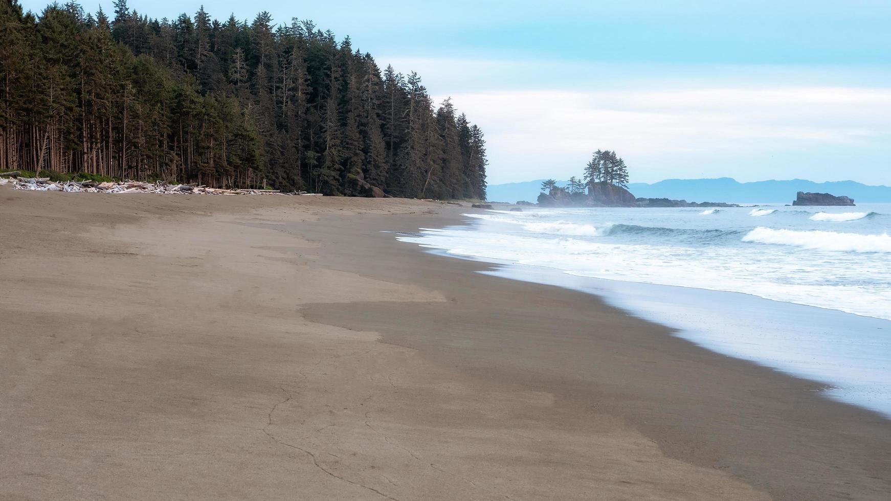 árvores verdes perto do mar foto