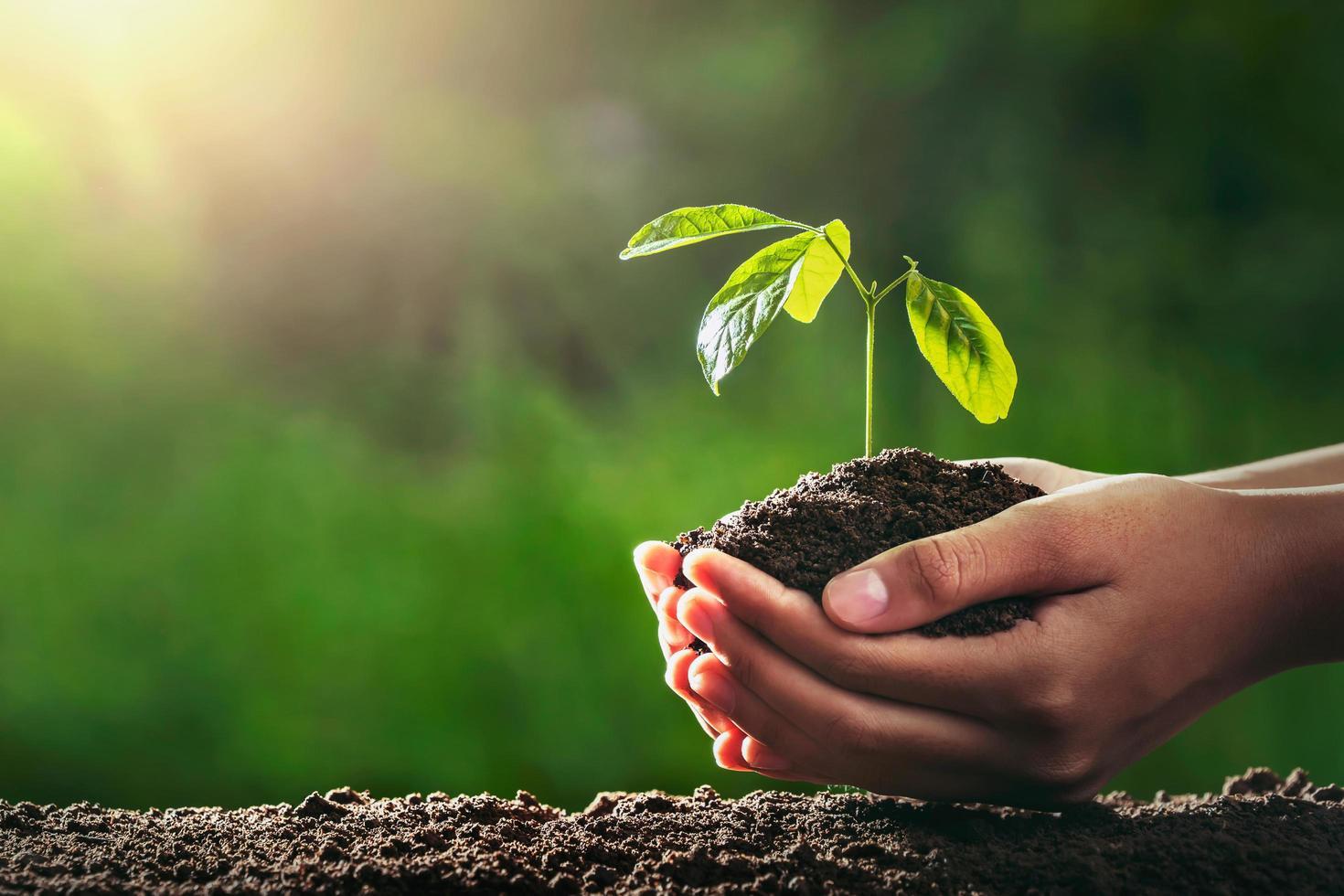 mãos segurando uma pequena árvore a ser plantada foto