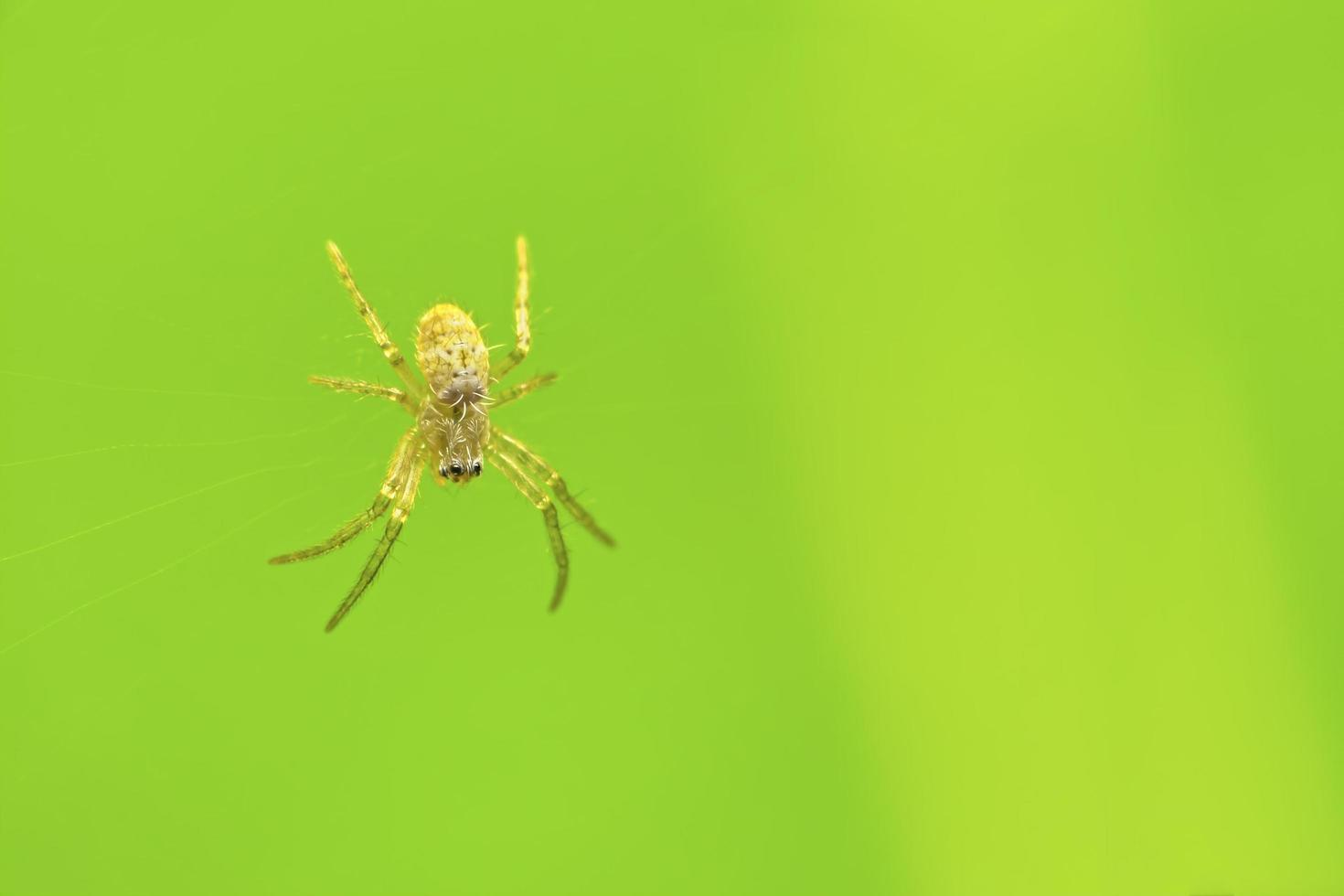 aranha na teia de aranha e fundo verde foto