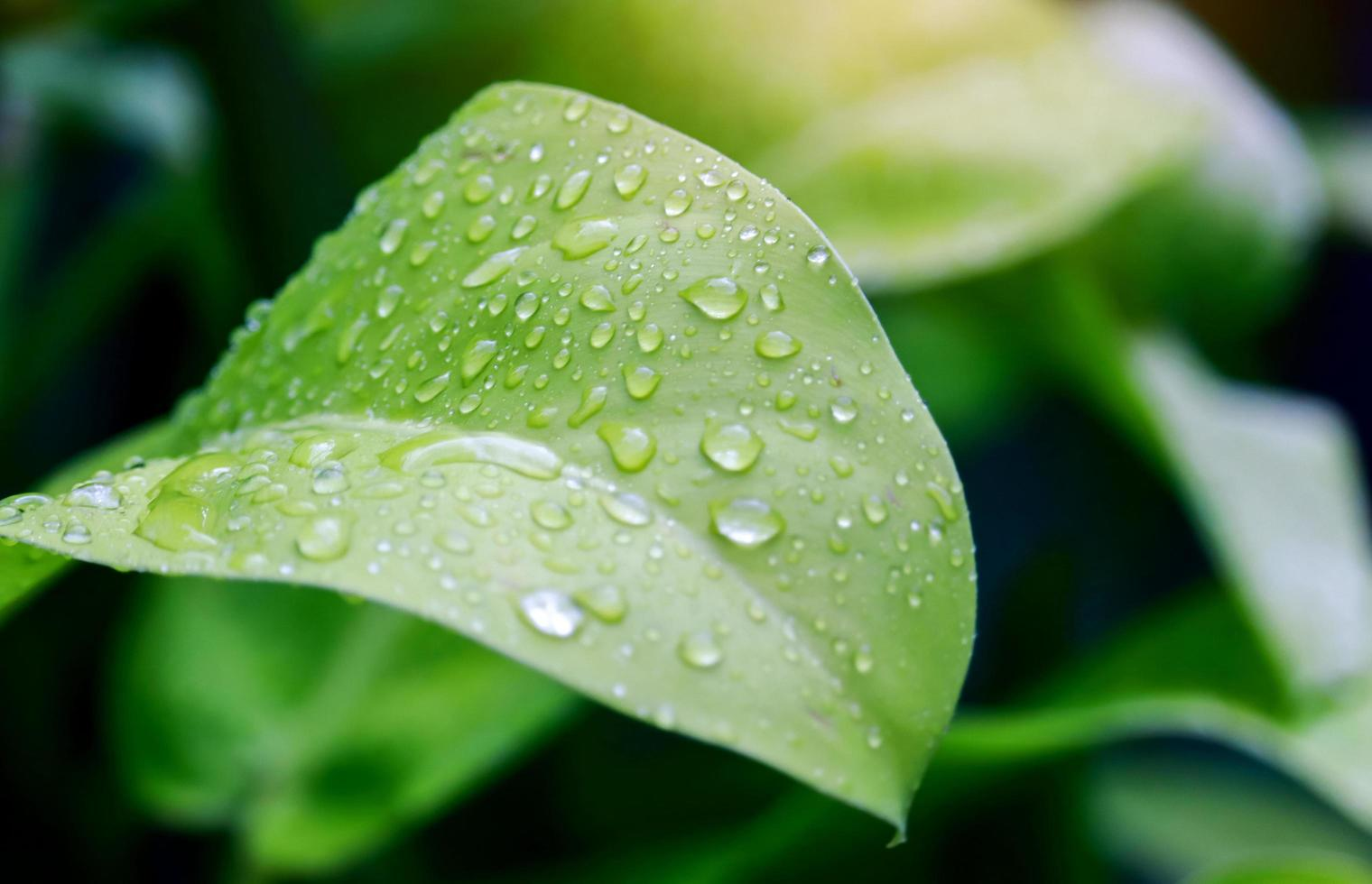 gotas de água nas folhas verdes foto