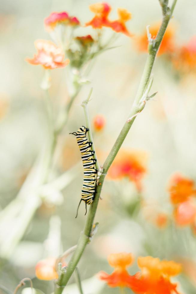 lagarta no caule da flor foto