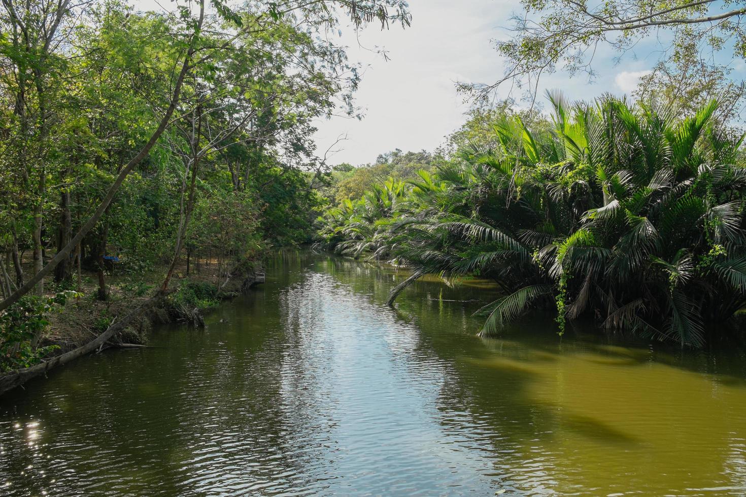 riacho que flui através do nipa palmeiral foto