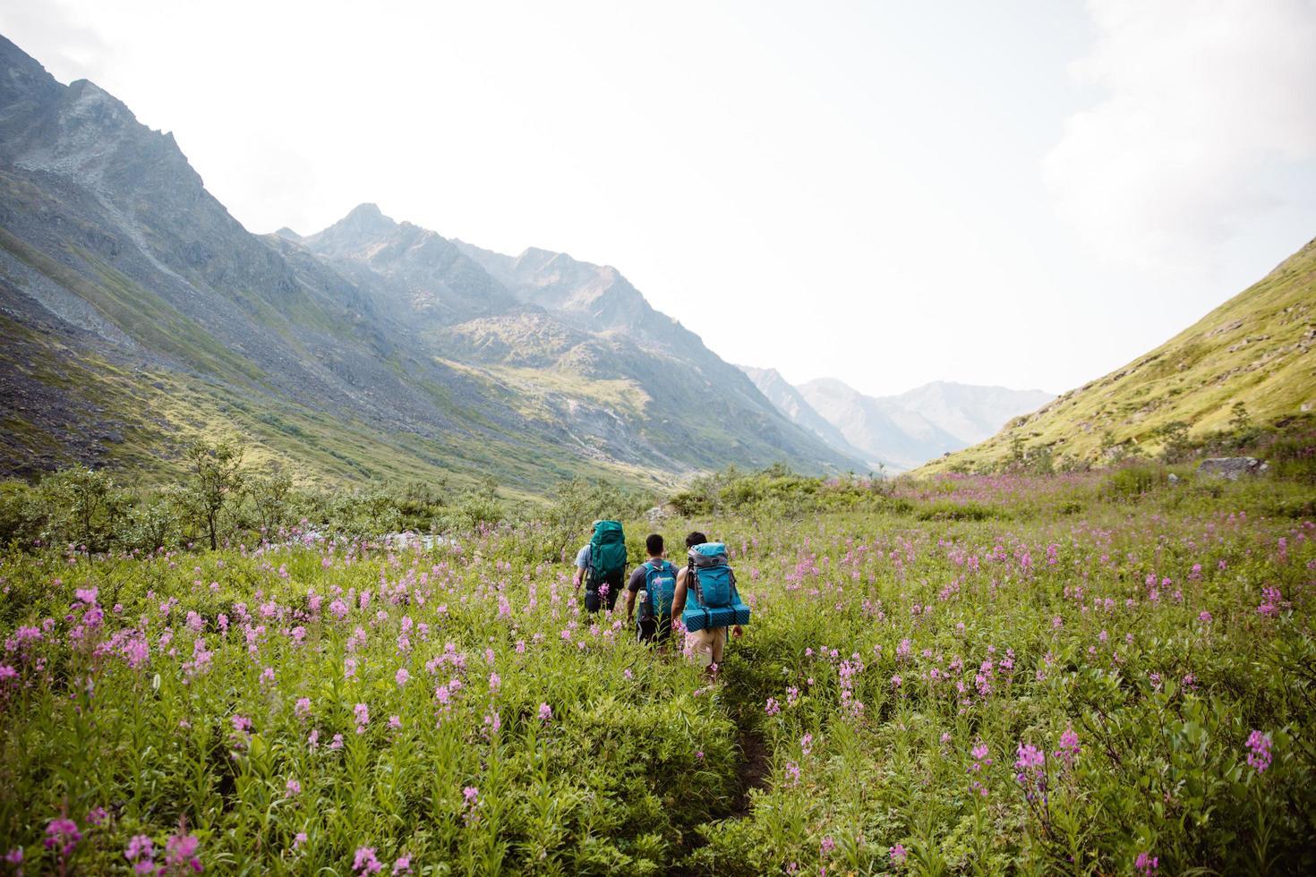 caminhantes caminhando entre flores silvestres no Alasca foto