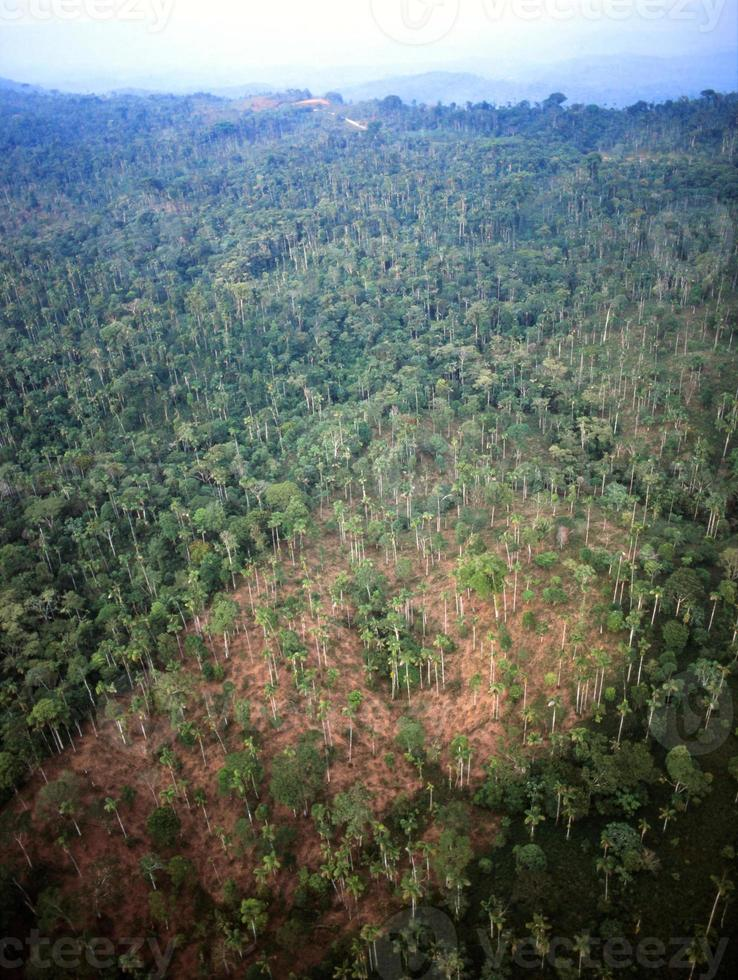 destruição da floresta tropical foto