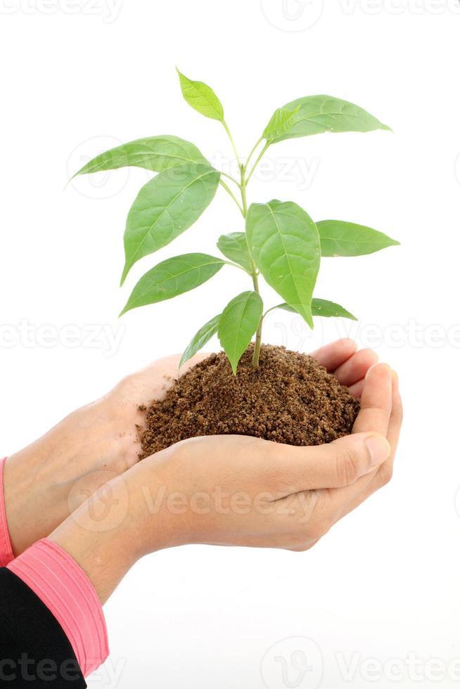 mulher de negócios segurando uma planta verde bebê em branco foto