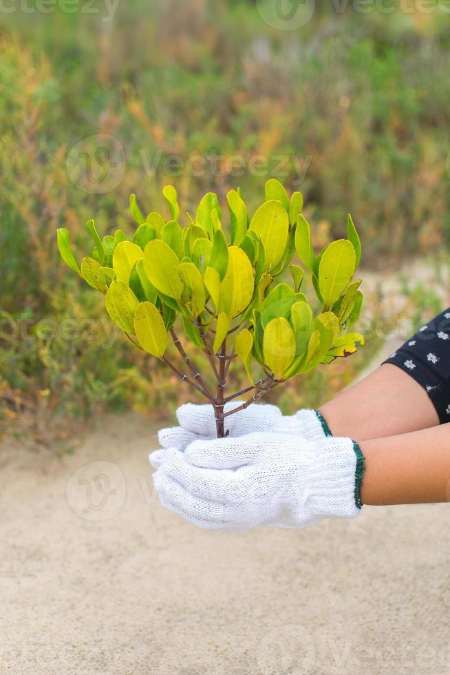 mão segurando e plantando uma nova árvore foto