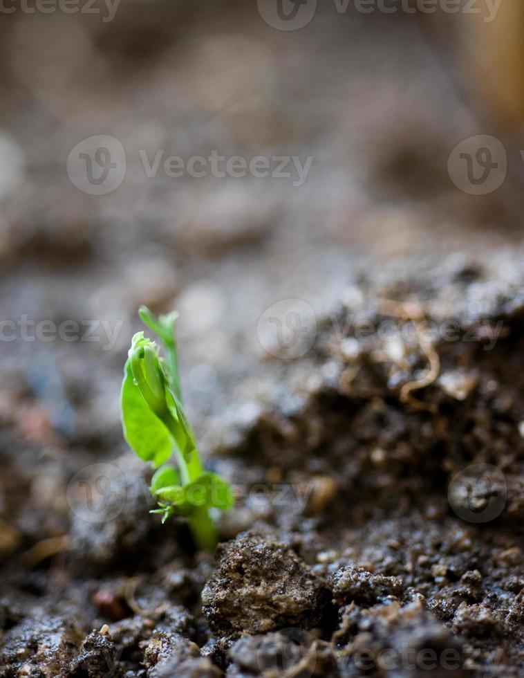 pequena planta foto