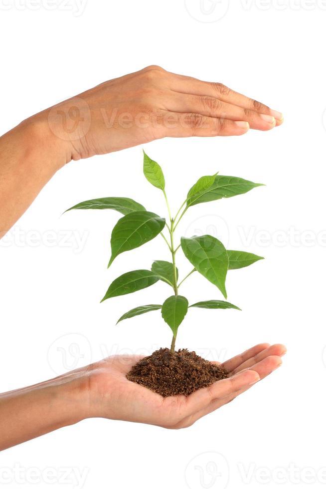 mão segurando uma planta verde bebê em branco foto