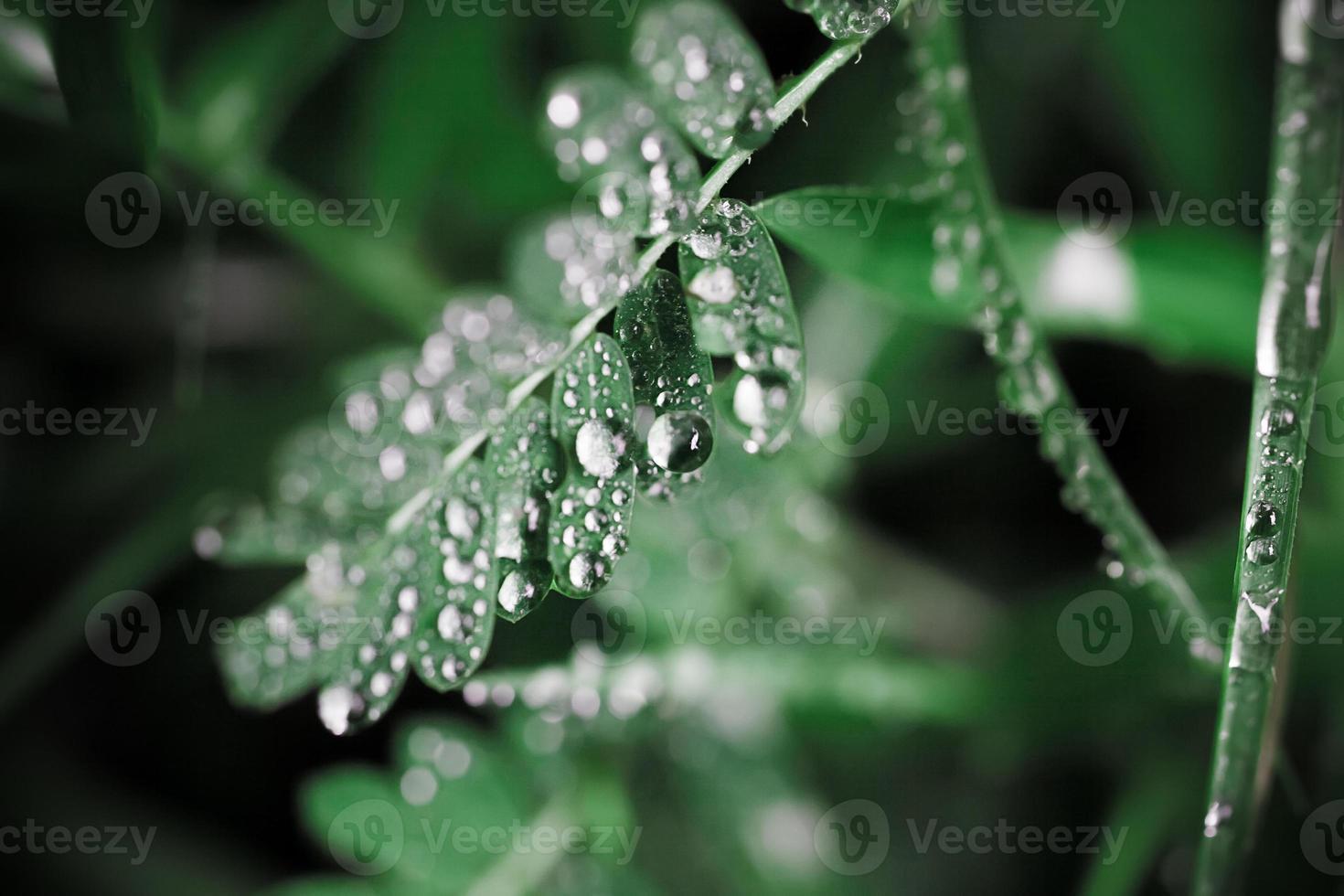 gotas de água na grama em cores retrô. tiro macro foto