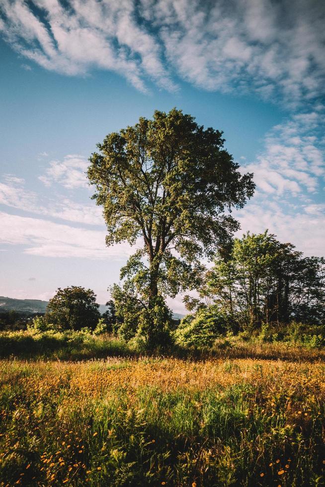 árvores verdes no campo durante o dia foto