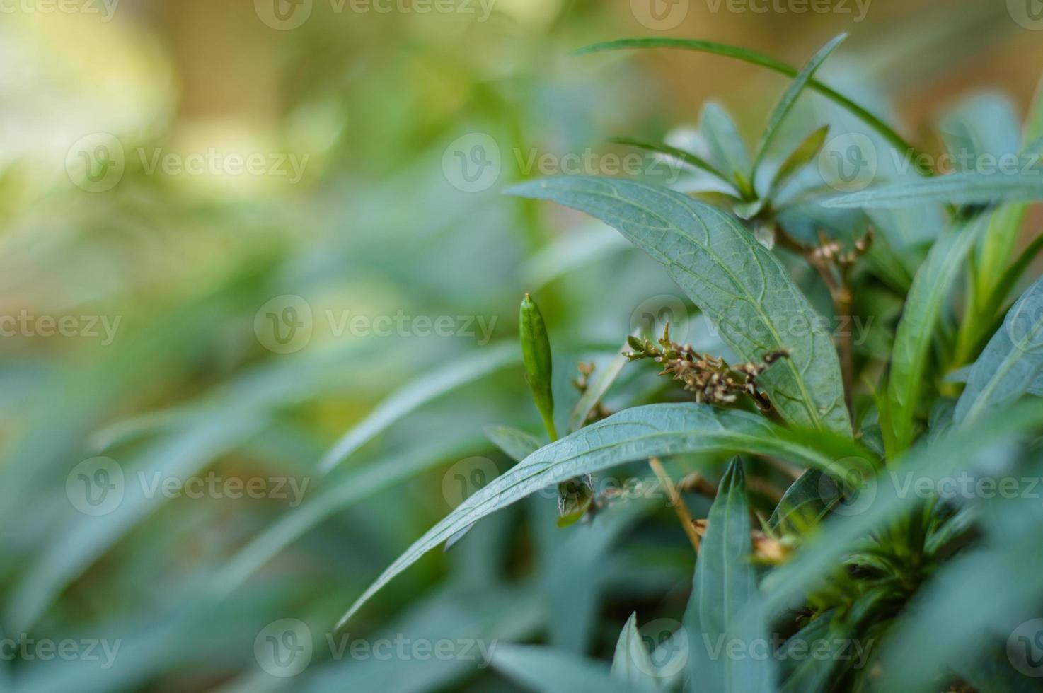 plantinha verde foto