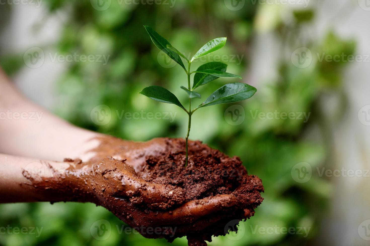 mãos segurando uma jovem planta verde foto