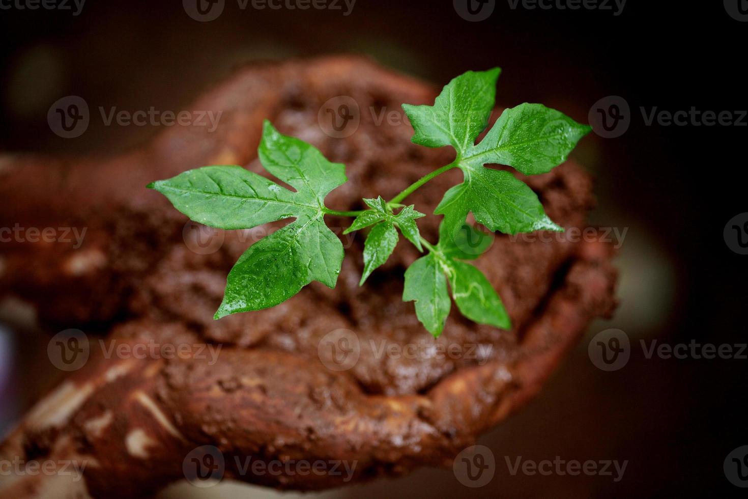 bebê planta - nova vida foto