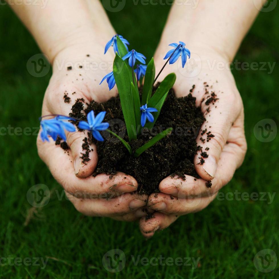 flores na palma da mão. foto