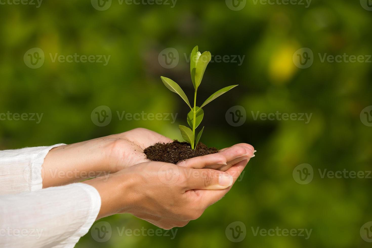segurando uma planta verde na mão foto