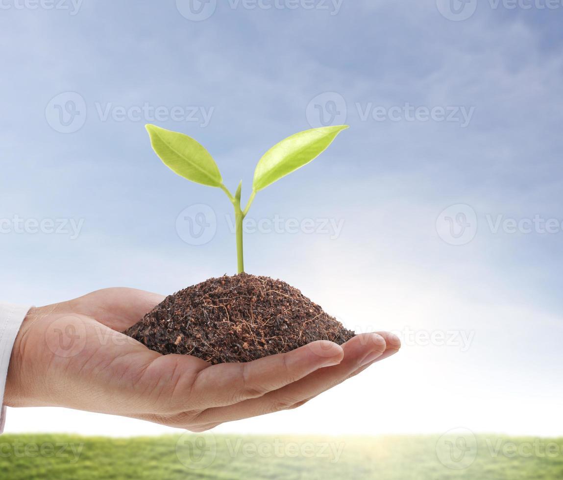 mão segurando uma muda verde brotando de um monte de terra foto