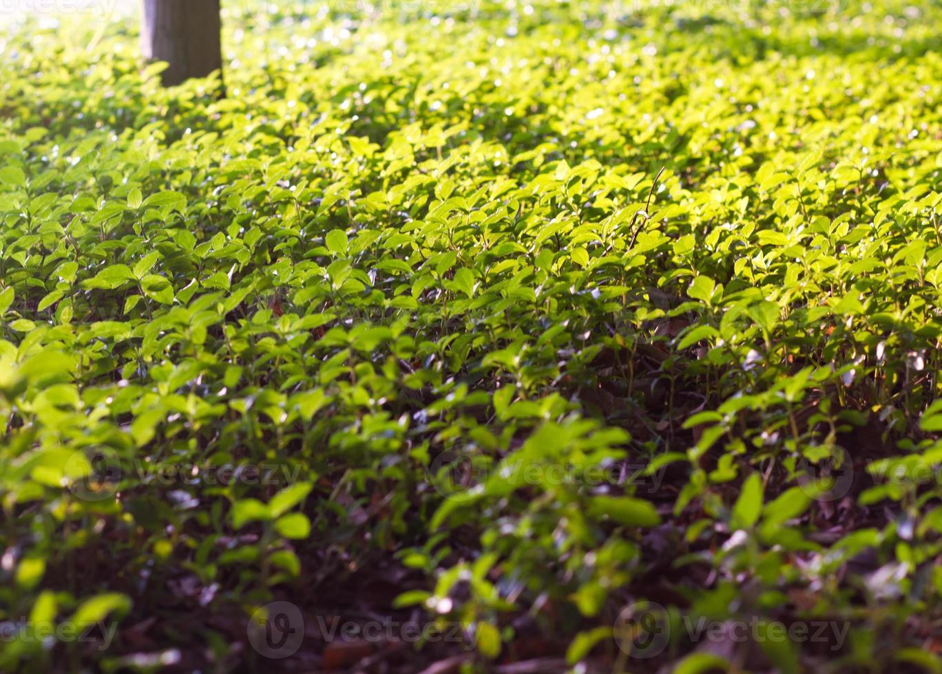 folha nas árvores foto