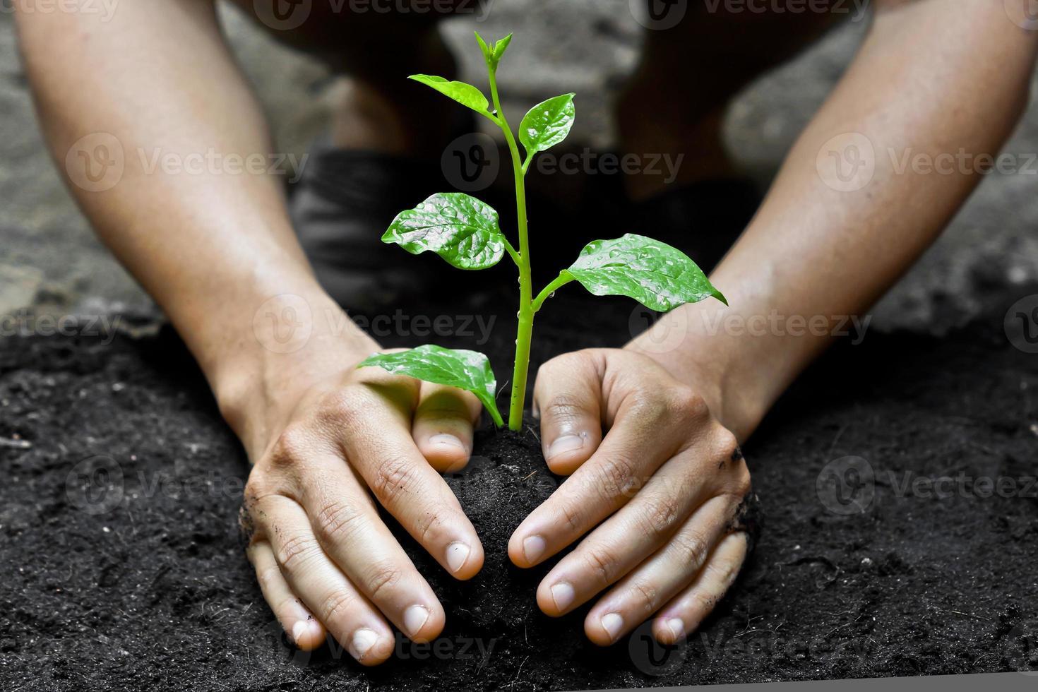 mãos crescendo árvore foto