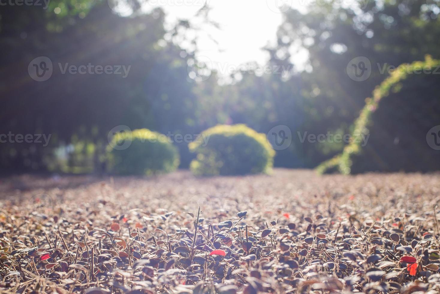 linda luz do sol espalhando-se nas plantas foto