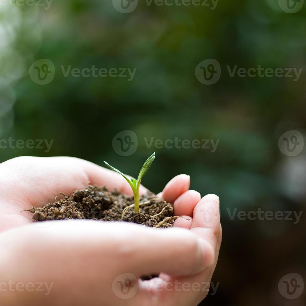 planta na mão foto
