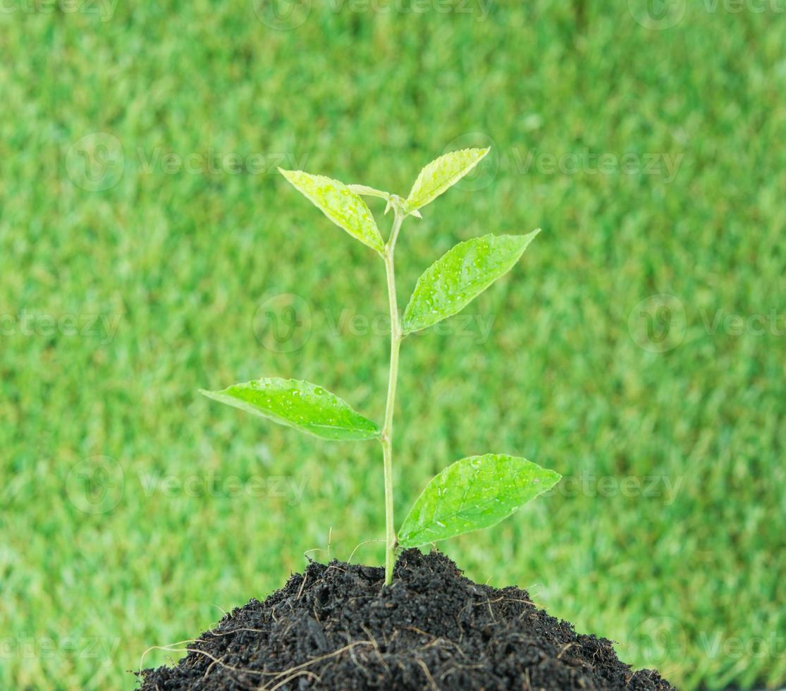 jovem planta verde nova vida foto