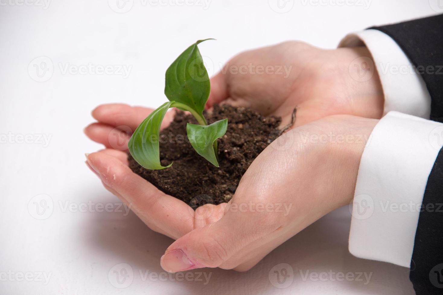 foto sobre um broto verde nas mãos de uma jovem