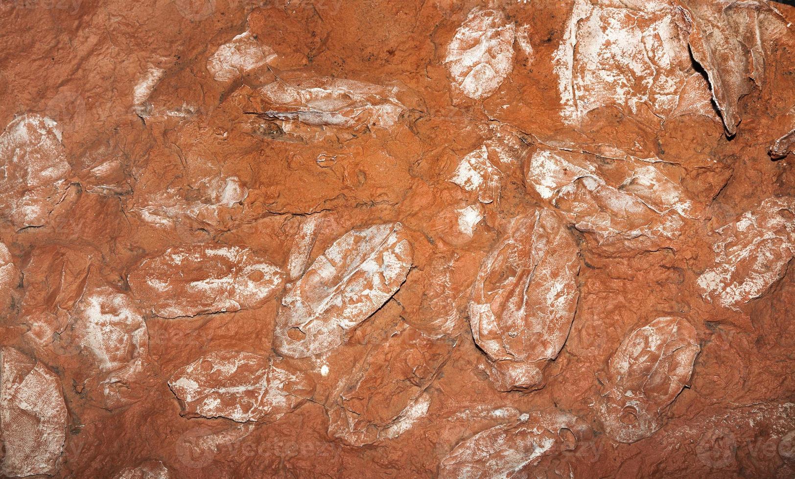 fóssil de peixe devoniano foto