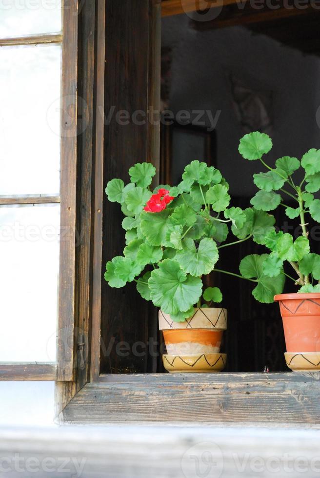flor das janelas de uma antiga casa rural na Romênia foto