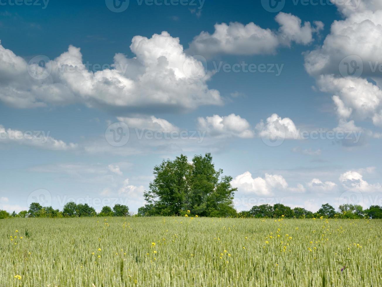 árvore e campo foto