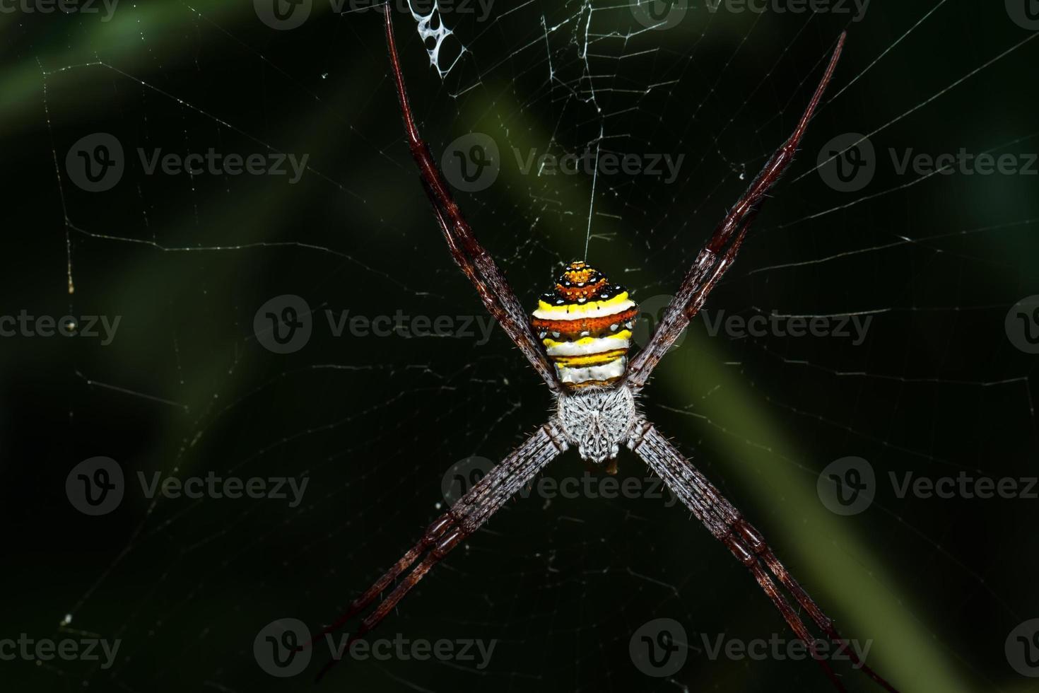 aranha na teia foto