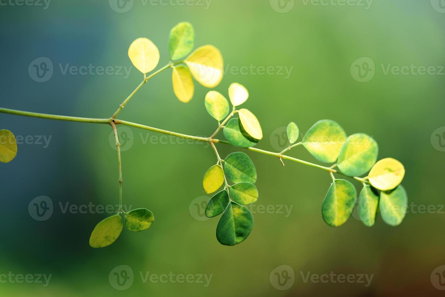 fundo de folhas verdes foto