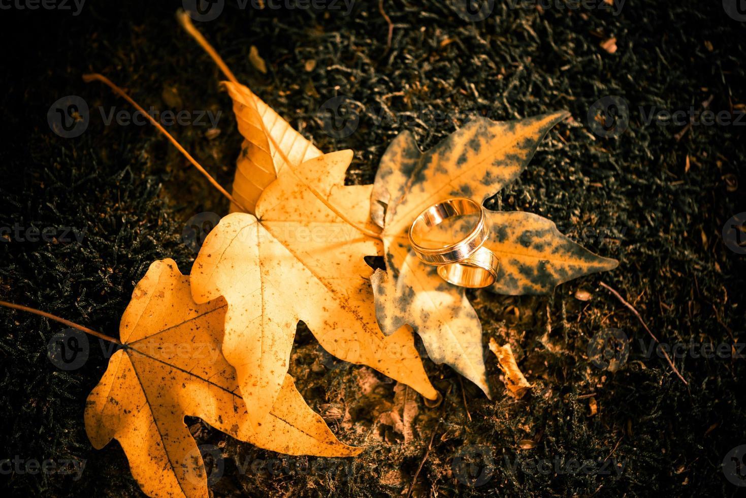 anéis de ouro nas folhas foto