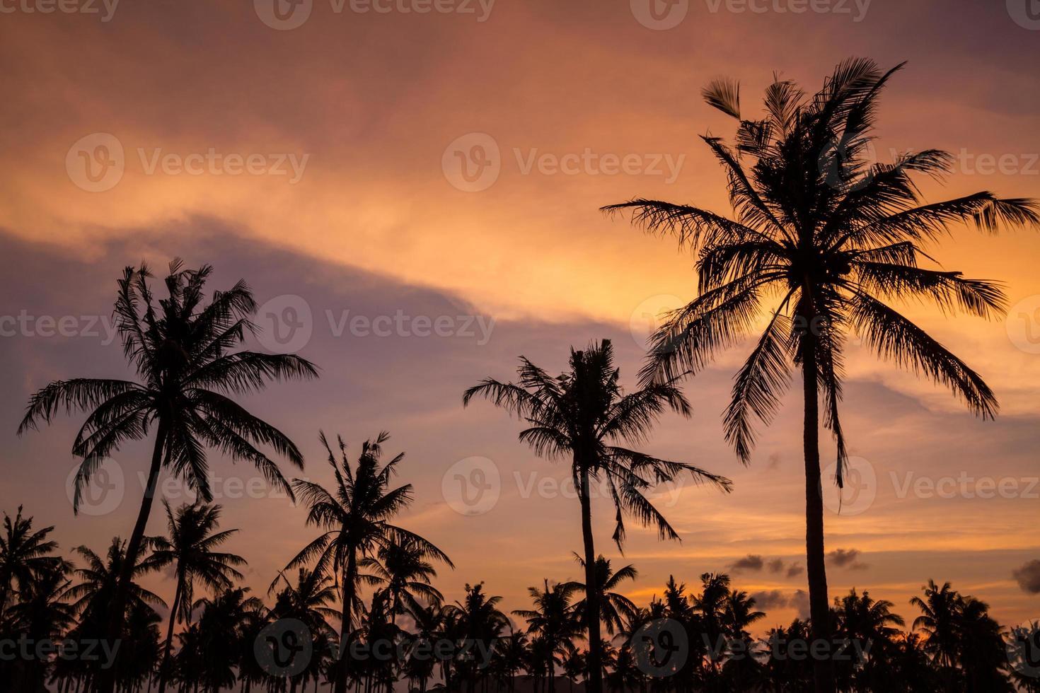 palmeiras no lindo pôr do sol foto