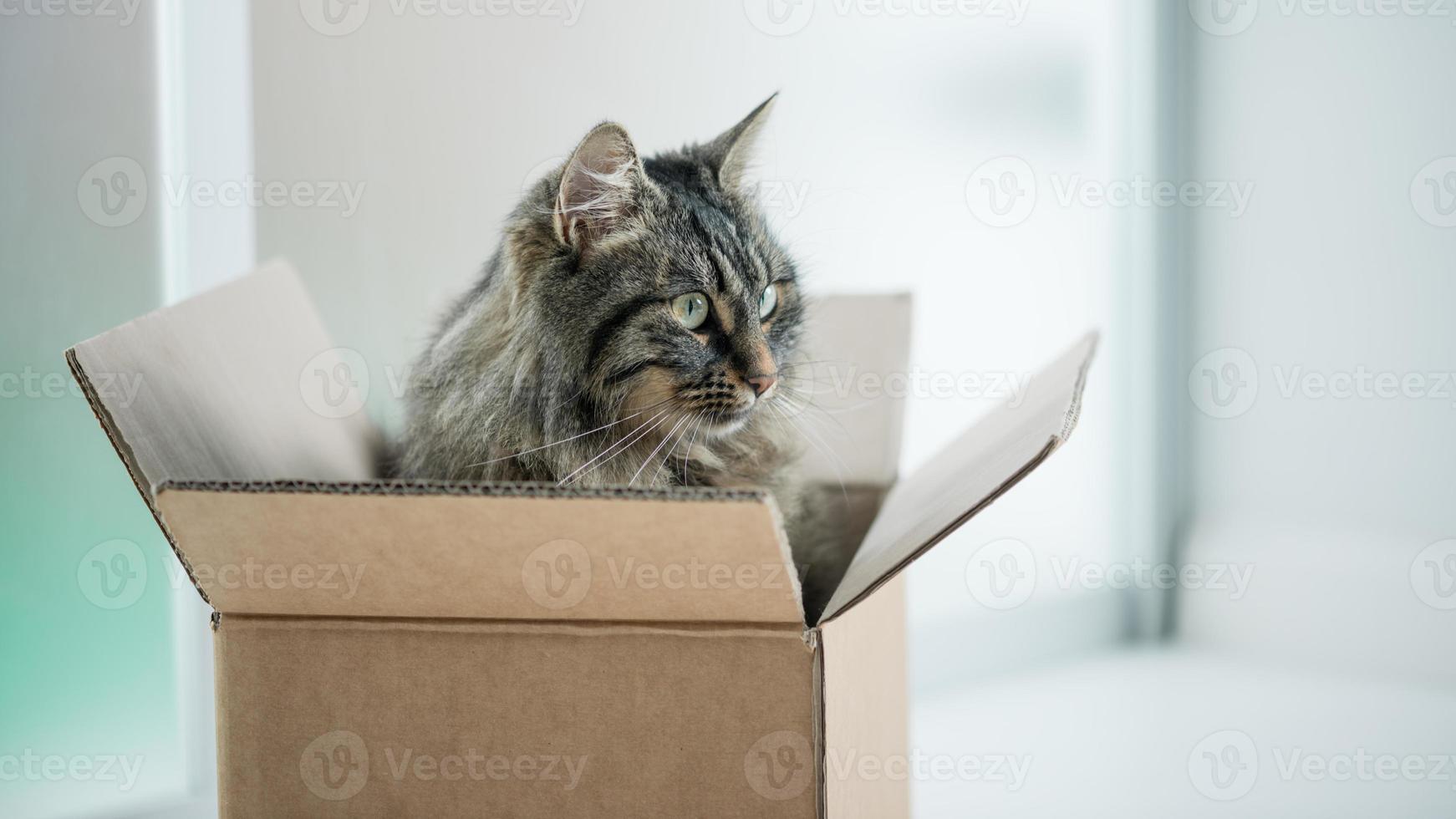 gato lindo em uma caixa de papelão foto
