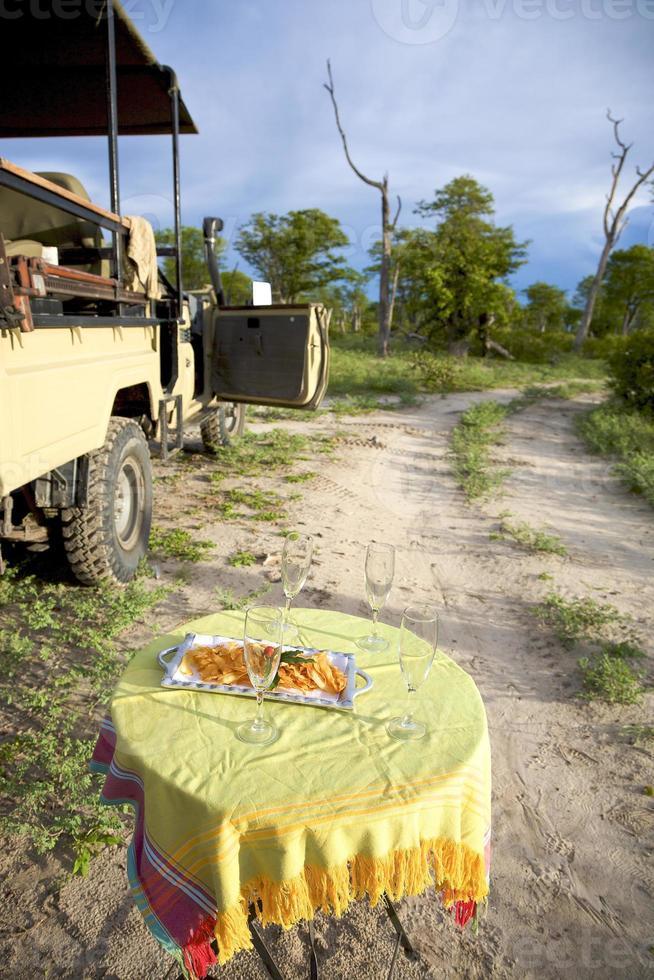 safári champanhe na reserva de caça de moremi. namibia foto