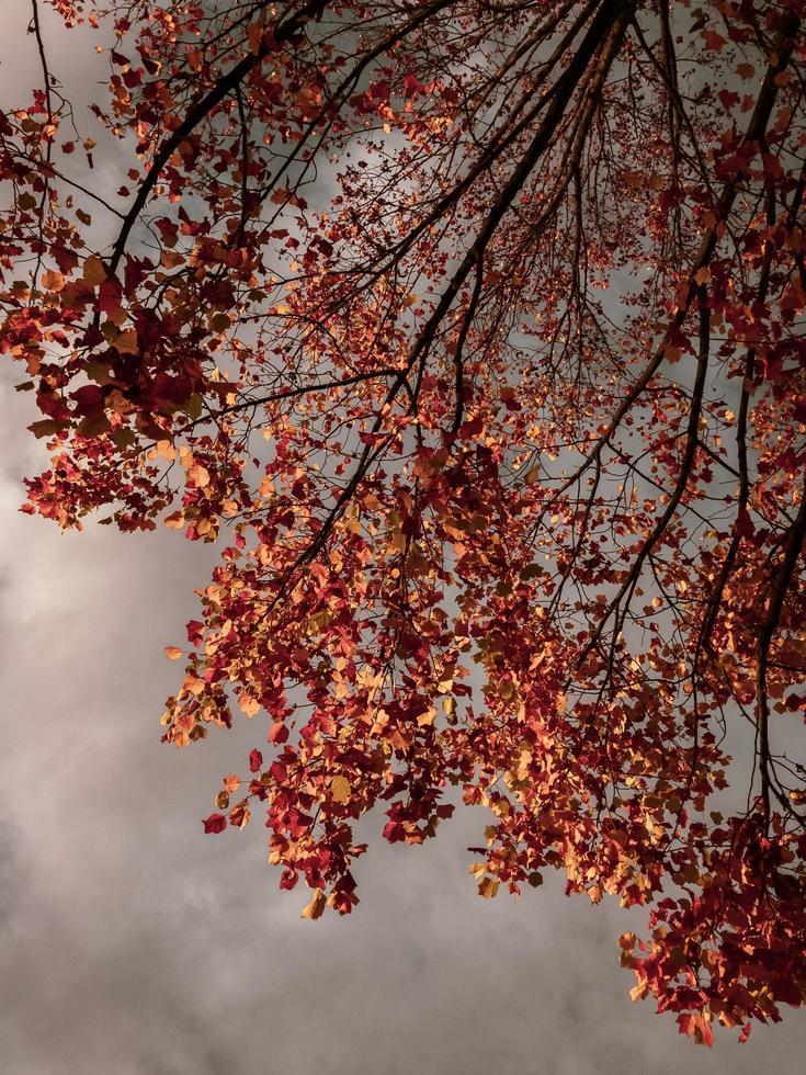 folhas marrons em um dia de outono foto